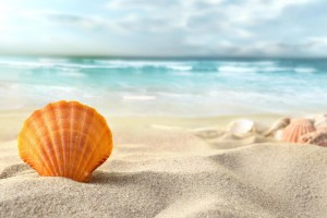 beach-sea-shell-sand-waves-blue-seawater-sunshine-travel-vacation-1920x1200
