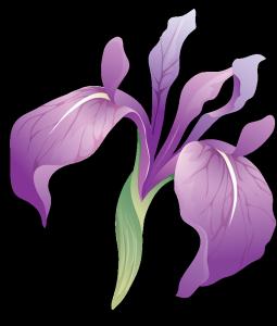 FLORES (IRIS) (50)